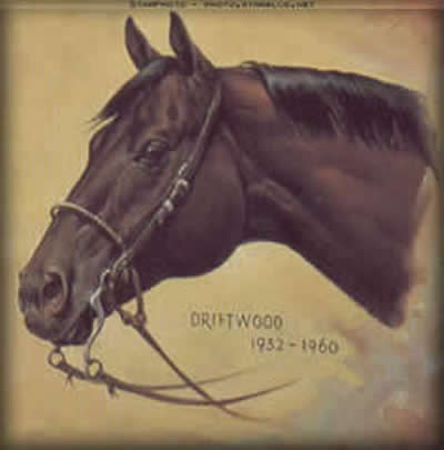 Driftwood, High Performance Quarter Horse