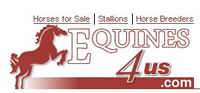 Quarater Horses For Sale