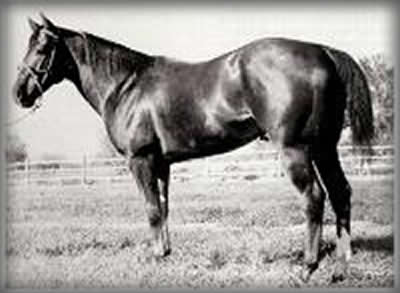 Hard Twist, foundation quarter horse
