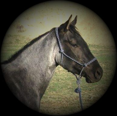PLENTY BLUE PEPPER BLUE ROAN  QUARTER HORSE