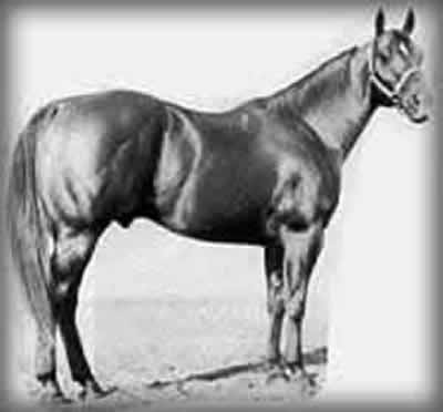 Peppy San, Superior Quarter Horse whose progeny can be found at Powder River Horses Ranch