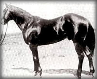 Joe Hancock, considered by some to be the greatest Quarter Horse that ever lived